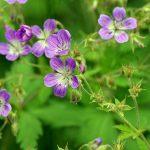 flower-830399_640